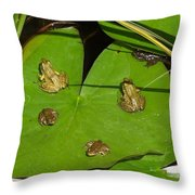 Different Stages Of Frog Growth Throw Pillow