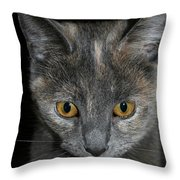 Dilute Tortishell Throw Pillow