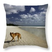 Dindo, Western Beach, Fraser Island Throw Pillow