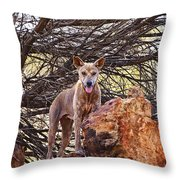 Dingo In The Wild V5 Throw Pillow