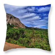 Dirt Roads And Aspen Forest In Colorado Throw Pillow