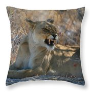 Disgruntled Lioness Throw Pillow