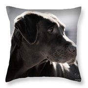 Distracted Dog Throw Pillow