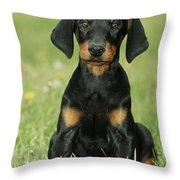 Doberman Pinscher Puppy Throw Pillow
