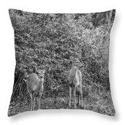 Doe A Deer Bw Throw Pillow