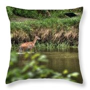 Doe Crossing The River Throw Pillow