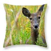 Doe In Morning Dew Throw Pillow