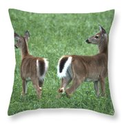 Does Throw Pillow