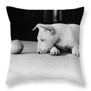 Dog And Ball Throw Pillow