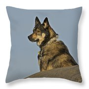 Dog At Point Bonita 2 Throw Pillow
