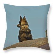 Dog At Point Bonita Throw Pillow
