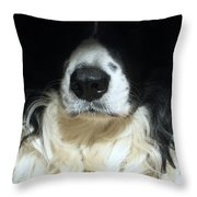 Dog Close Up Throw Pillow