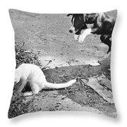 Dog Jumping On An Unsuspecting Kitten Throw Pillow