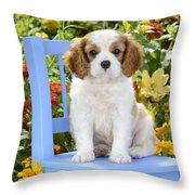 Dog On Blue Chair Throw Pillow by Greg Cuddiford
