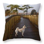 Shiba Inu On Path Throw Pillow