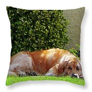 Dog Relaxing Throw Pillow