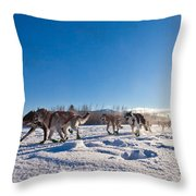 Dog Team Pulling Sled Throw Pillow