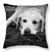 Dog Tired Throw Pillow