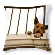 Doggie Down Time Throw Pillow