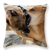 Dogs Fight On The Beach In Emerald Throw Pillow