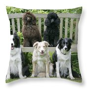 Dogs Sitting On Bench Throw Pillow