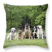 Dogs, Various Breeds In A Line Throw Pillow