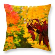 Dogwood And Fall Colors Throw Pillow