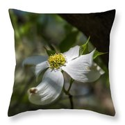 Dogwood Bloom In Shadows Throw Pillow