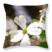 Dogwood Blooms Throw Pillow