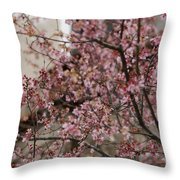 Dogwood Starting To Bloom Throw Pillow