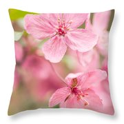 Dogwood Tree Bloom Close Up In Spring Throw Pillow