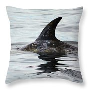 Dolphin In Monterey Throw Pillow