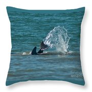 Dolphin Tale Throw Pillow