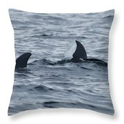 dolphins in Panama Throw Pillow