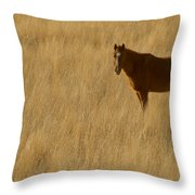 Domestic Horse   #5332 Throw Pillow