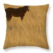 Domestic Horse   #5347 Throw Pillow