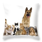 Domestic Mammal Pets Throw Pillow
