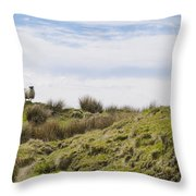 Donegal Sheep Throw Pillow
