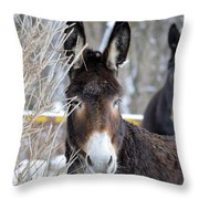 Donkey And The Mule Throw Pillow