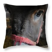 Donkey Behind Fence Throw Pillow