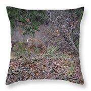 Donkey Deer Feeding Throw Pillow