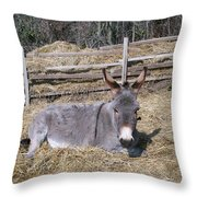 Donkey In Hay Throw Pillow