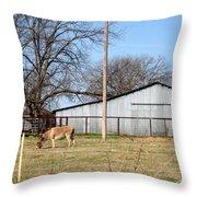 Donkey Lebanon In Oklahoma Throw Pillow