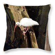 White Ibis Bird Throw Pillow