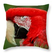 Dont You Dare To Stare Macaw Throw Pillow