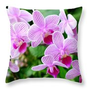 Doritaenopsis Flower Throw Pillow