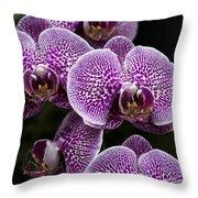 Doritaenopsis Leopard Prince 2651 Throw Pillow