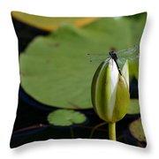 Dot-tailed Throw Pillow