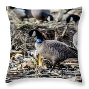 Double Banded Aleutian Throw Pillow
