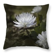Double Bloodroot Throw Pillow